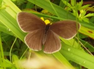 And butterflies...