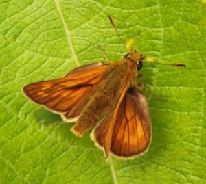 ...more butterflies...